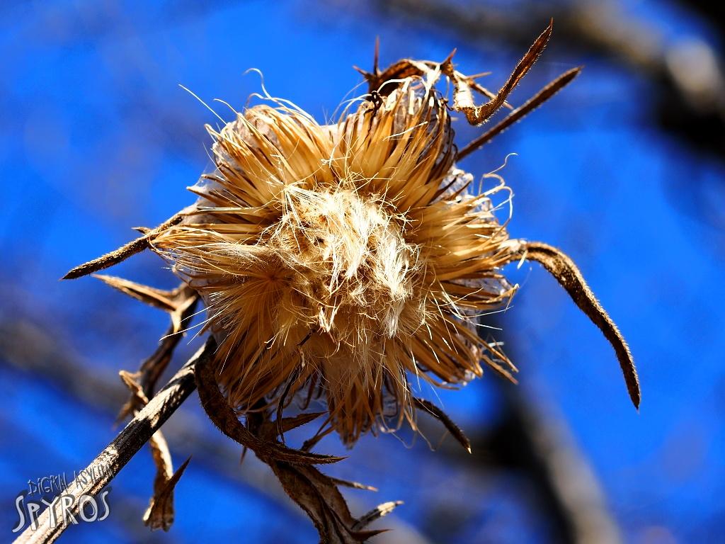 Spišská Magura - flóra