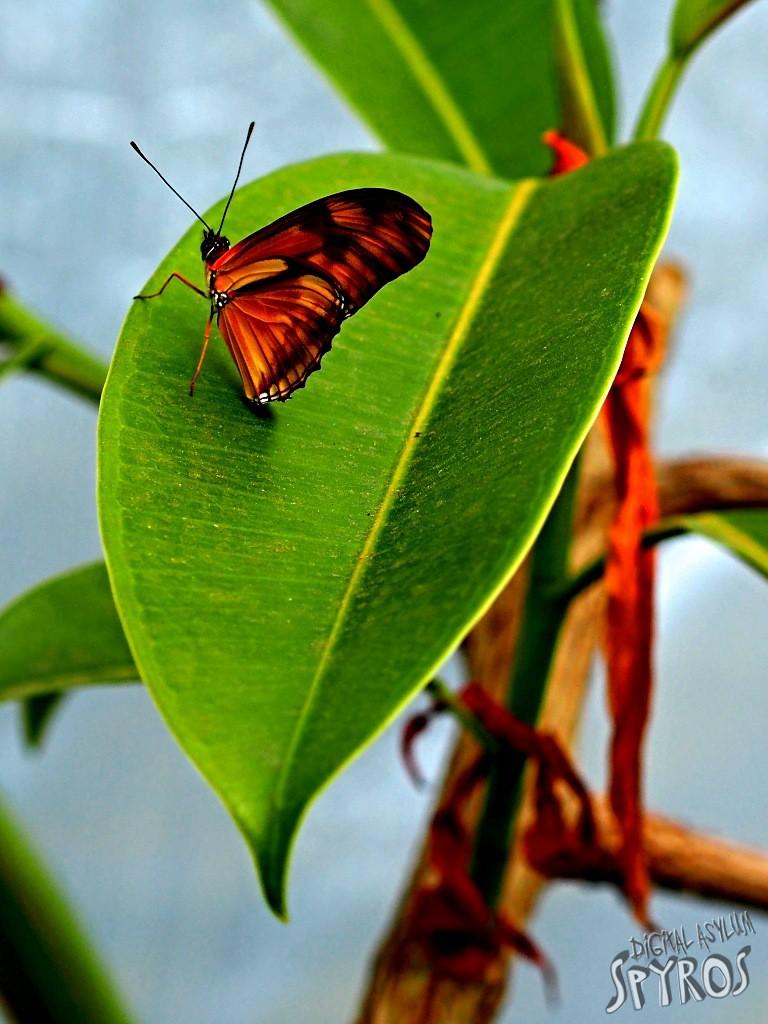 Bojnice ZOO - motýľ